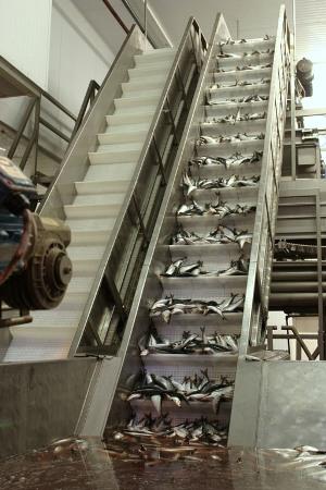 Scanbelt - Modular Plastic Conveyor Belts - Bulk feeder